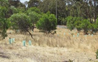 Many trees went onto Carol and Bart's property that backs onto the Brisbane Ranges.