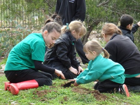 Fifteen Trees planting