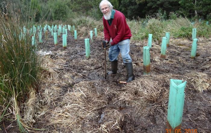 Swamp planting RD May 2016