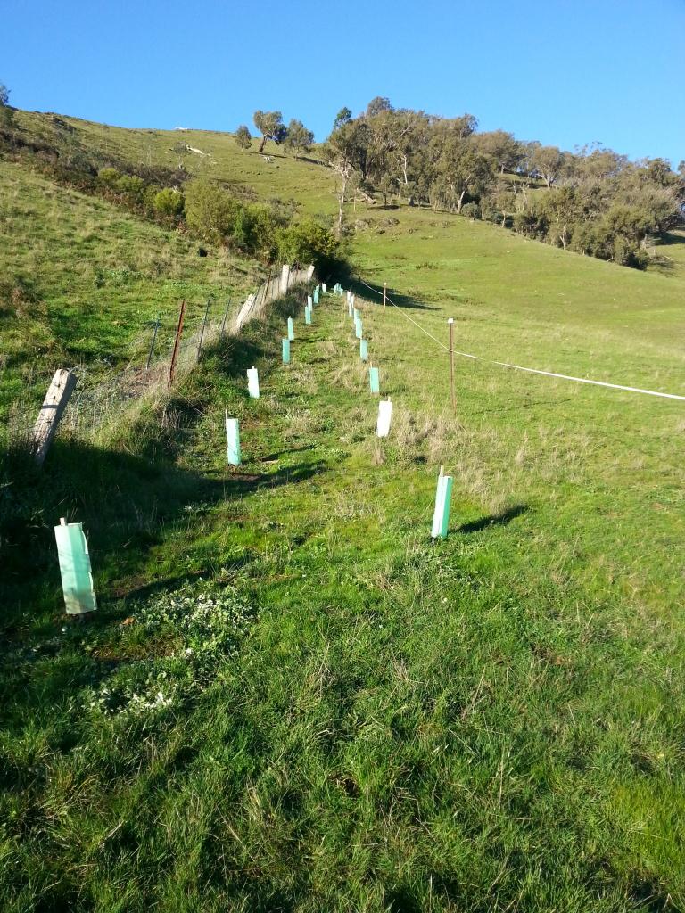 New trees up in the hills of Murrindindi.