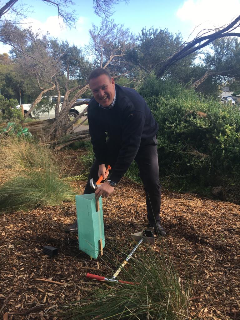 tree planting csr